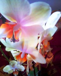 Tanzende Orchidee by edelart