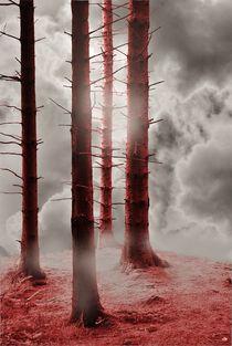 Forest Trees n Red von CHRISTINE LAKE