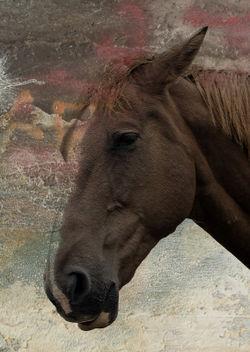 Horse-head-2a