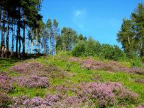 Heidelandschaft im Mittelgebirge von Manfred Koch