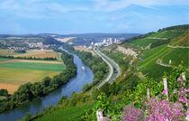 Panoramablick von den Weinbergen zum Main by Manfred Koch