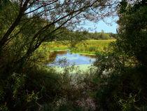 Weidenmosaik mit Blick zu leuchtendem Teich mit Schilf von Manfred Koch