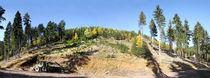 Panoramablick zu einer Bergkuppe im Mittelgebirge by Manfred Koch