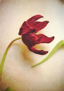 Tulip von Sybille Sterk