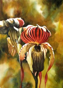 ladyslipper orchid by alfred ng