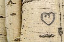 Hearts von Barbara Magnuson & Larry Kimball
