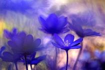 Frühlingsblau  von Ursula Pechloff