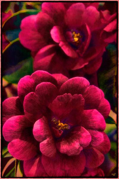Redbonsaiflowers