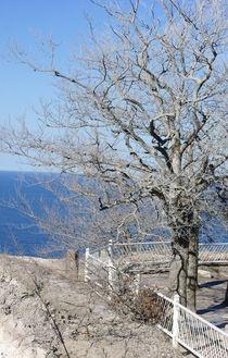 Der weiße Baum von Bastian  Kienitz