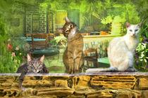 Cafe Cats von Trudi Simmonds