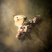 'Butterfly Spirit #01' von loriental-photography