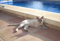 Donnington Cat by Henrietta Benjamin