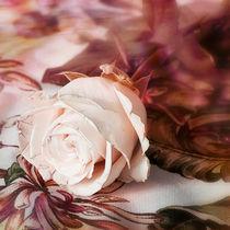 Rose von ateliersite
