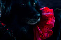 Rouge et Noir by Larisa Kroshkin