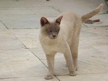 Donnington Cat von Henrietta Benjamin