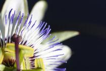 A flower macro image. by Gordan Bakovic