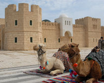 Camels17