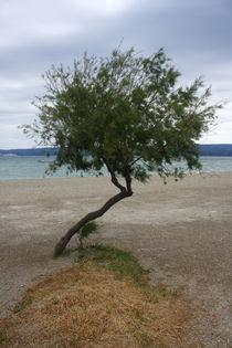 A tree on the beach. by Gordan Bakovic