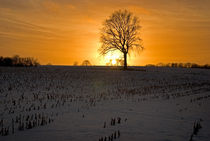 Baum im Winter by topas images