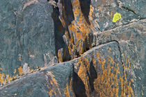 Blue Rocks & Lichen by Peter J. Sucy