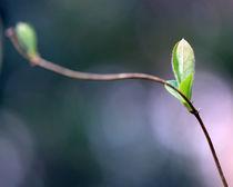 Frühlingserwachen von Jens Berger