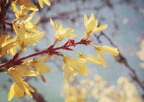 Spring Blessing von Sybille Sterk