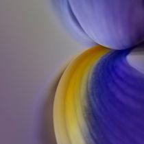 Blütentraum in blaulila by Ursula Fleiß