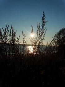 Weidensträucher im Sonnenlicht von jefroh