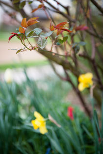 ..finally spring.. von Katarzyna Körner