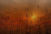 SUNSET IN THE VALLEY von tomyork