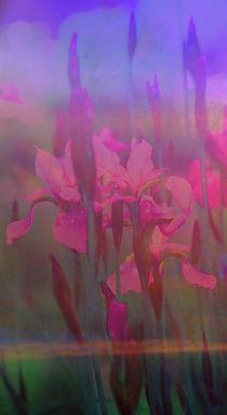 Verliebte Iris by © Ivonne Wentzler