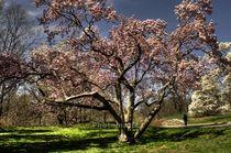 Cherry tree von Maks Erlikh