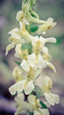 Spring flowers. by evgeny bashta