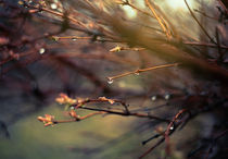 Rain drops on the branches.Nature background. by Ekaterina Planina