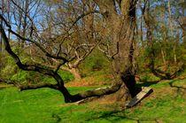 Portrait of tree von Maks Erlikh