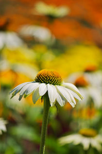 Summer Impression by AD DESIGN Photo + PhotoArt