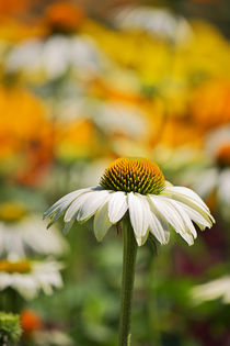Summer Impression II by AD DESIGN Photo + PhotoArt
