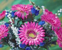 Pink Flowers von Diane Bell