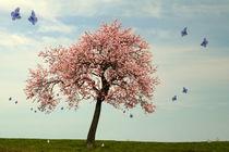 Schmetterlingstanz um den Mandelbaum von Christine  Hofmann