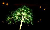 Tanz der Schmetterlinge in der Nacht  von Christine  Hofmann