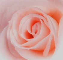 Rose-immer wieder bezaubernd by Ingrid Eichhorst