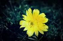 wild flower von Alexandr Verba