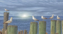 GULLS ON GROYNES by tomyork