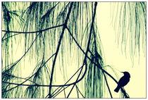 micronesia bird by Ben Bürkle