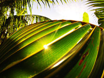 palm leaf  by Ben Bürkle