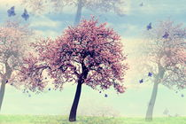 der Mandelbaum -2- von Christine  Hofmann