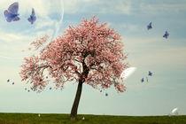 Schmetterlingstanz  -2- von Christine  Hofmann
