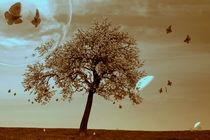 Schmetterlingstanz im Abendlicht -2- von Christine  Hofmann