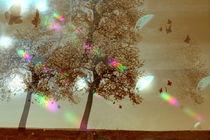 Schmetterlingstanz im Abendlicht  -1- von Christine  Hofmann