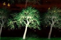 Schmetterlingstanz bei Nacht -2- von Christine  Hofmann